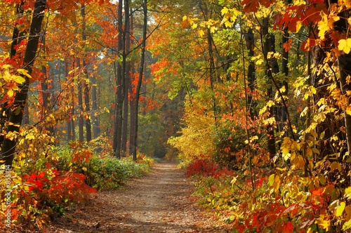 Papiers peints Forets colors of fall