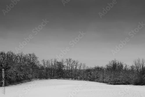 snow landscape #2 © Sean Nel