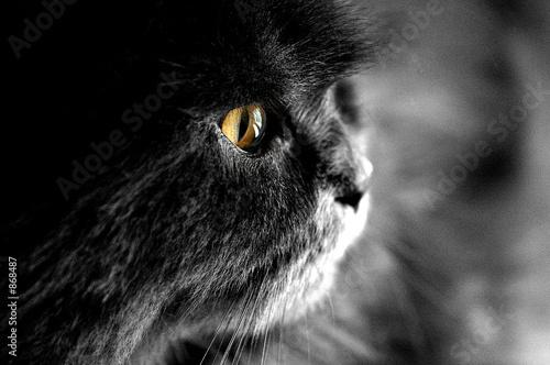 Photo sur Toile Croquis dessinés à la main des animaux kater