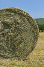 Organic Hay Bale