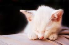 Cat Photo - Angelic Sleep 2 - Black Background