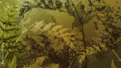 Valokuva  grunge fern background