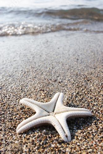 Foto-Leinwand - starfish (von Liv Friis-larsen)