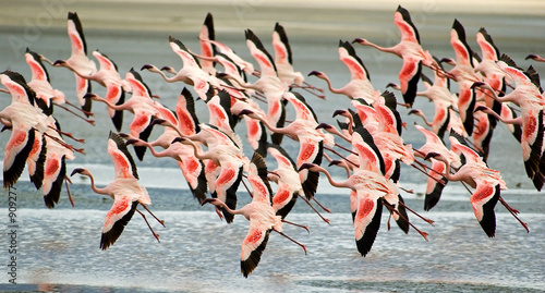 Foto op Aluminium Flamingo flamingoes flying low