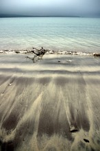 Driftwood On Ventry Beach