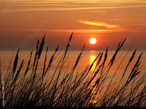 gräser am strand #917608