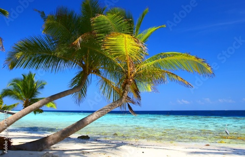 Foto-Kissen - phenomenal beach with palm trees and bird (von Malbert)