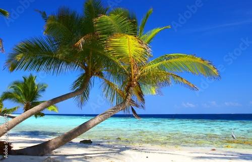 Foto-Leinwand - phenomenal beach with palm trees and bird