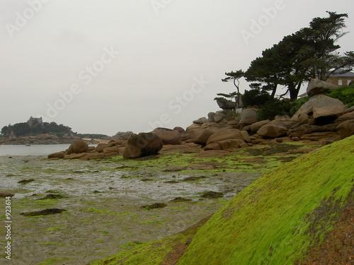 Canvas Print algues a maree basse