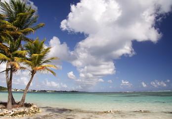 Fototapeta caribbean beach