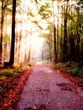 Leinwanddruck Bild chemin d'automne
