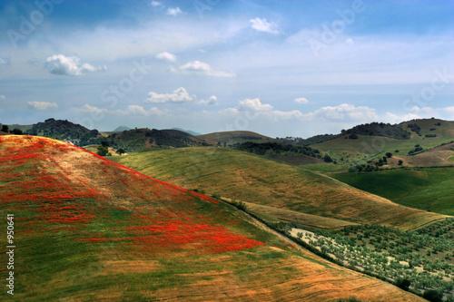 Fotografie, Tablou poppy hills