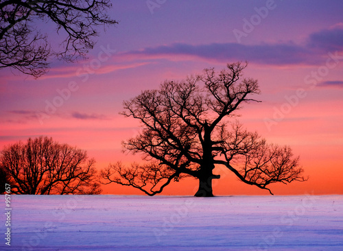 Poster Taupe oak tree at sunset