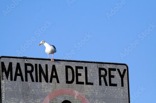 Photo  marina del rey