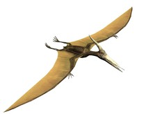 Pterus The Pterosaur