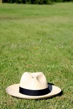 Sombrero En La Hierba Vertical