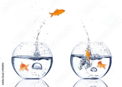 Fotografie, Obraz  splash!!!