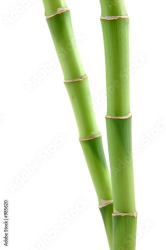 szczesliwe-lodygi-bambusa