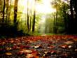 Leinwandbild Motiv feuilles d'automne