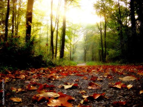 Leinwanddruck Bild - CCPhotographe : feuilles d'automne