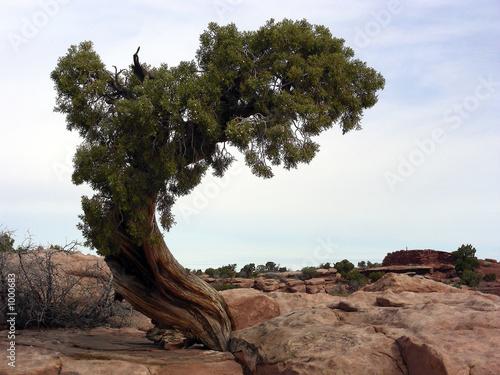 Foto  lonely tree