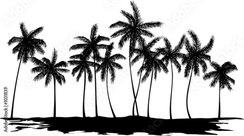 palm trees #1031839