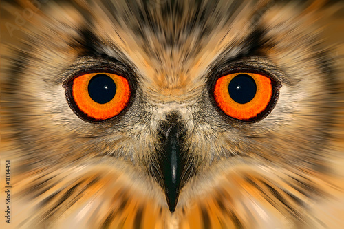 Tuinposter Uilen cartoon enhanced owl portrait