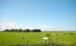 Leinwanddruck Bild summer farmland