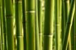 Leinwandbild Motiv bambou