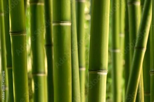 Foto op Plexiglas Bamboe bambou