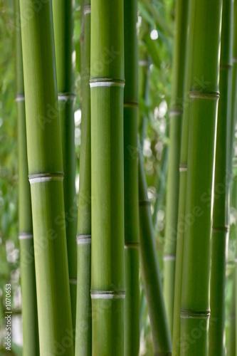 Foto op Canvas Bamboo bambou