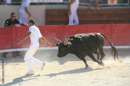 Deurstickers Stierenvechten raseteur