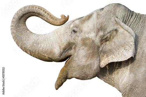 Photo sur Toile Elephant elephant