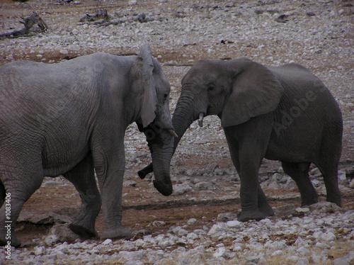 Garden Poster Elephant combat d'éléphants