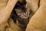 Kotek w płóciennym worku