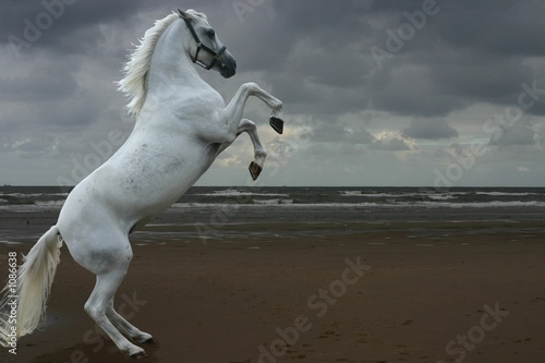 Foto op Canvas Paarden grey rearing on the beach