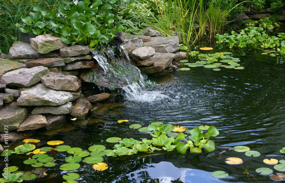 Fototapety, obrazy: homemade pond