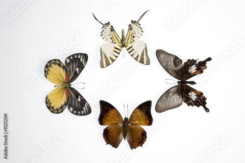 Fotografie, Obraz  mariposas7851
