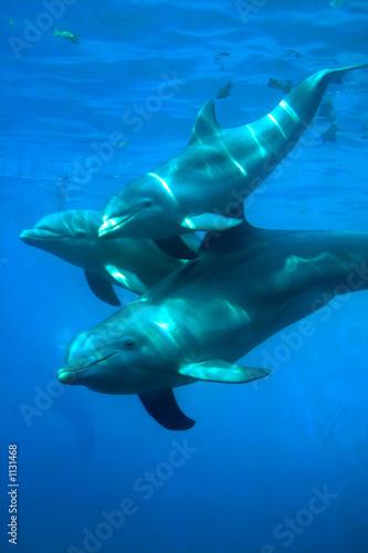 Keuken foto achterwand Dolfijn delfines - 1