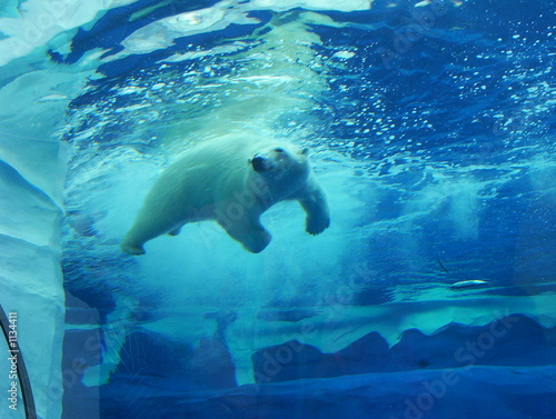 Canvas Prints Polar bear where's the fish?