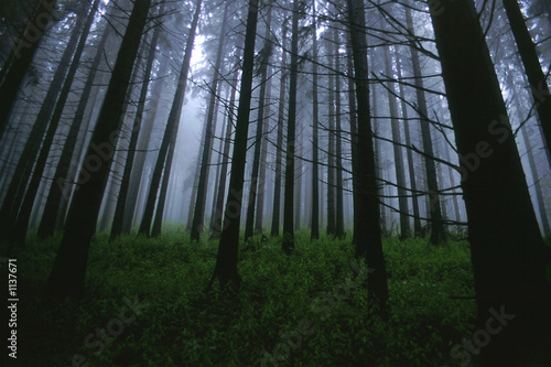 fog and forest (2)