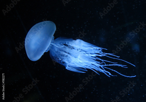 Photographie  jellyfish