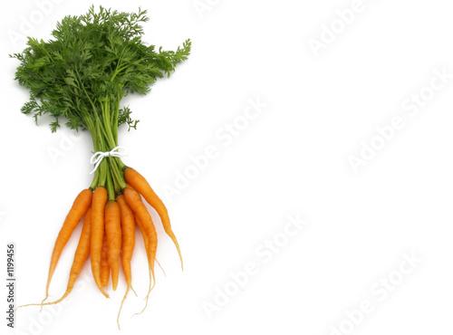 Fototapeta carrot bunch