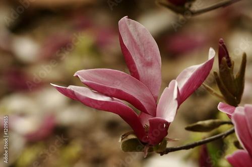 Photo Stands Bird magnolia
