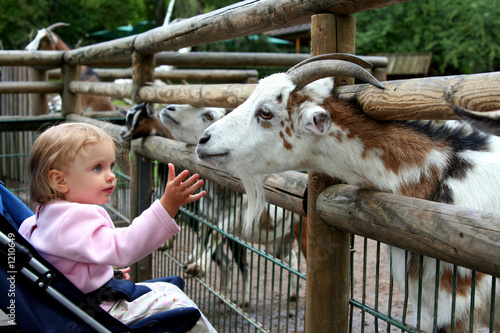 Fotografie, Obraz  in the zoo