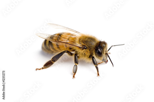 Spoed Foto op Canvas Bee worker bee