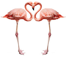 Love Birds On White
