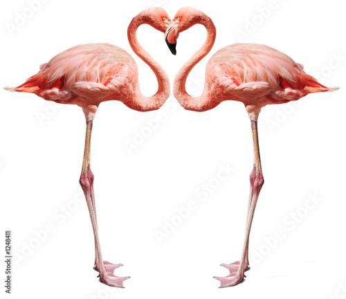 Garden Poster Flamingo love birds on white