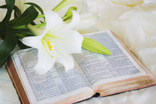 Easter Lily And Bible