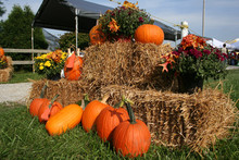 A Pumpkin Display At A Fall Festival